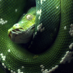 Coiled by FriendFrog