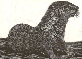Otter Scratchboard by MissSeaShanty