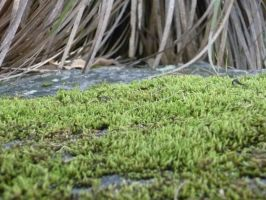 Moss Macro Stock by storms-and-lightning