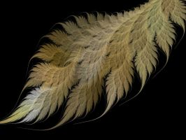 Fern Tails. by Thelma1
