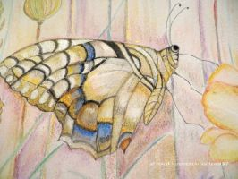Swallowtail section by GeaAusten
