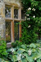 Levens Hall Window by Forestina-Fotos