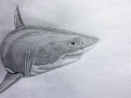 Great White by Mikeb233