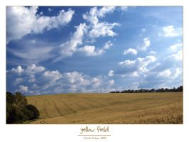 yellow field by Hasche