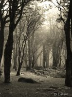 The old glade by du-la