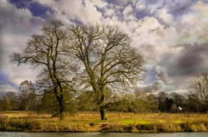 Two Trees by NickField