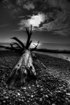 Drifted Ashore by Sticks55