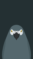 Grey Parrot - bird wallpaper for iPhone by birnimal