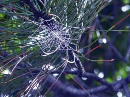 `Caught in your Web of Lies by JohnstonColleen