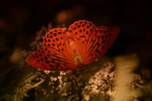 ButterflyY by QuiZ04291993