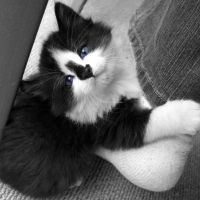 The Kitten's Blue Eyes by V-M-R-Photography