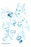 Canine Expressions by CanisAlbus