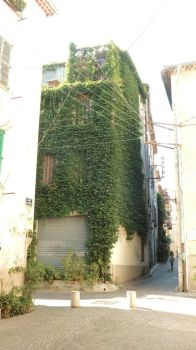 Nature plant on House by FloraLoveNL