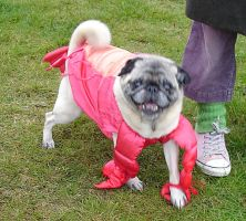 pug as lobster by NorthAmerican-Scum