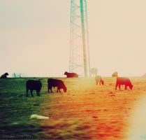 out.to.pasture by sarah-marley