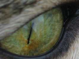 Cats Eye by perfect-tragedy