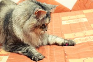 I've caught the red dot! by ElyneNoir