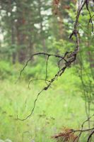 Another crooked branch by FFFim