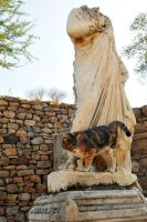 Ephesian kitty 1 by wildplaces