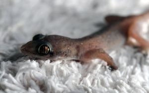 Gecko by Itz-Photo-Time