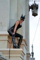 Cat Woman's Ledge by CelestialRaven16