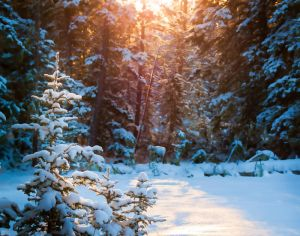 Luminous Winter by CharlieA-Photos