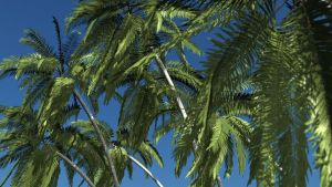 Palms of The Pacific by ExtremeProjects