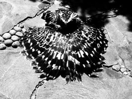 Black and white Owly 2 by KardiaArgeei