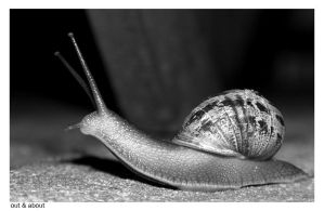 Snail 2 by vickibruce