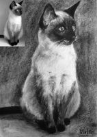 Siamese Cat by Vialir