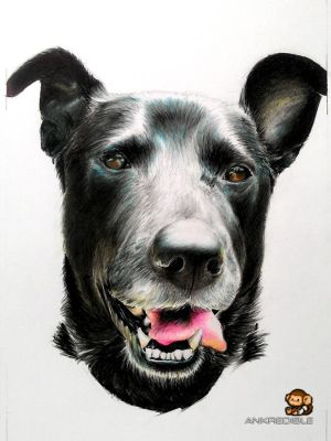 Pepper (Color Pencil Drawing) by Ankredible