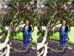 XI View Stereo Pair Of Mrs a* And Rhododendrons by aegiandyad