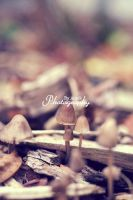 Mushrooms by AniekPhotography