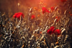 pure joy... by ildiko-neer