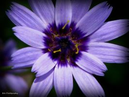 Purple Passion by erbphotography