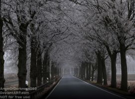 Frosty road - Germany 2017 by AngelOfDarkness089