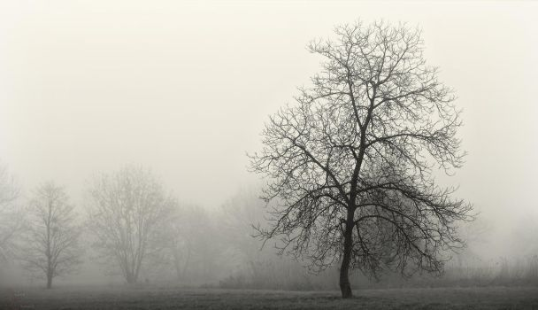 Arbre de la brume 3 by k-simir