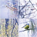 spring collage by Iridescent-happinesS