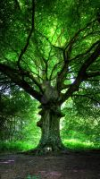 HDR Tree by wreck-photography