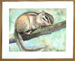 Chipmunk by bookstoresue