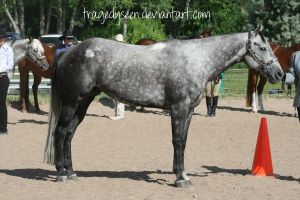 Quarter Horse Stock 47 by tragedyseen