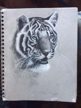 Charcoal Tiger by Kaptain-Obvious