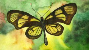 Butterfly by aakritiarts