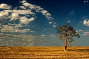 lonely tree by skipper81