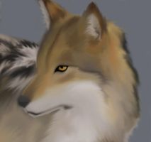 Realistic Wolf by foxwithwings13