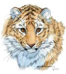 Young Sweet Tiger by sschukina