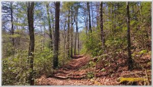 Sunny Pine Thicket on Ace Gap Trail by slowdog294