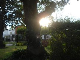 See the Sun - by Obedecealpanecillo