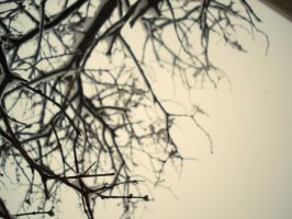 branches by Minii