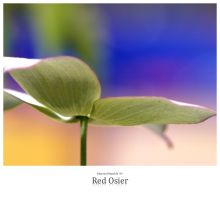 Red Osier by signmeupscotty